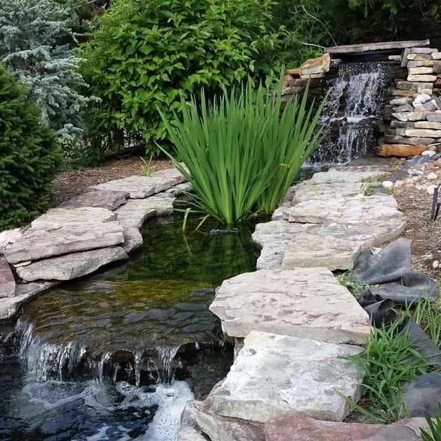 hongslandscape-gardening-flowers-watergardening-koi-koipond-landscaping-hongslandscape_14232911849_o