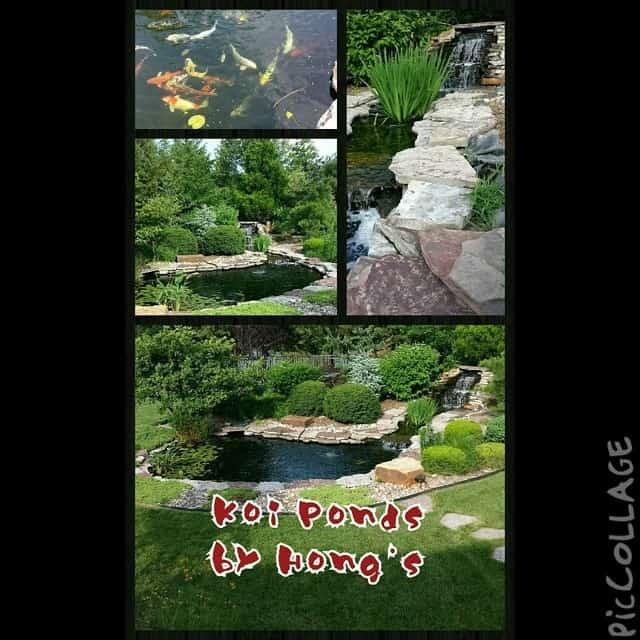 hongslandscape-hongslandscape-gardening-watergardening-koi-koipond_14421493955_o