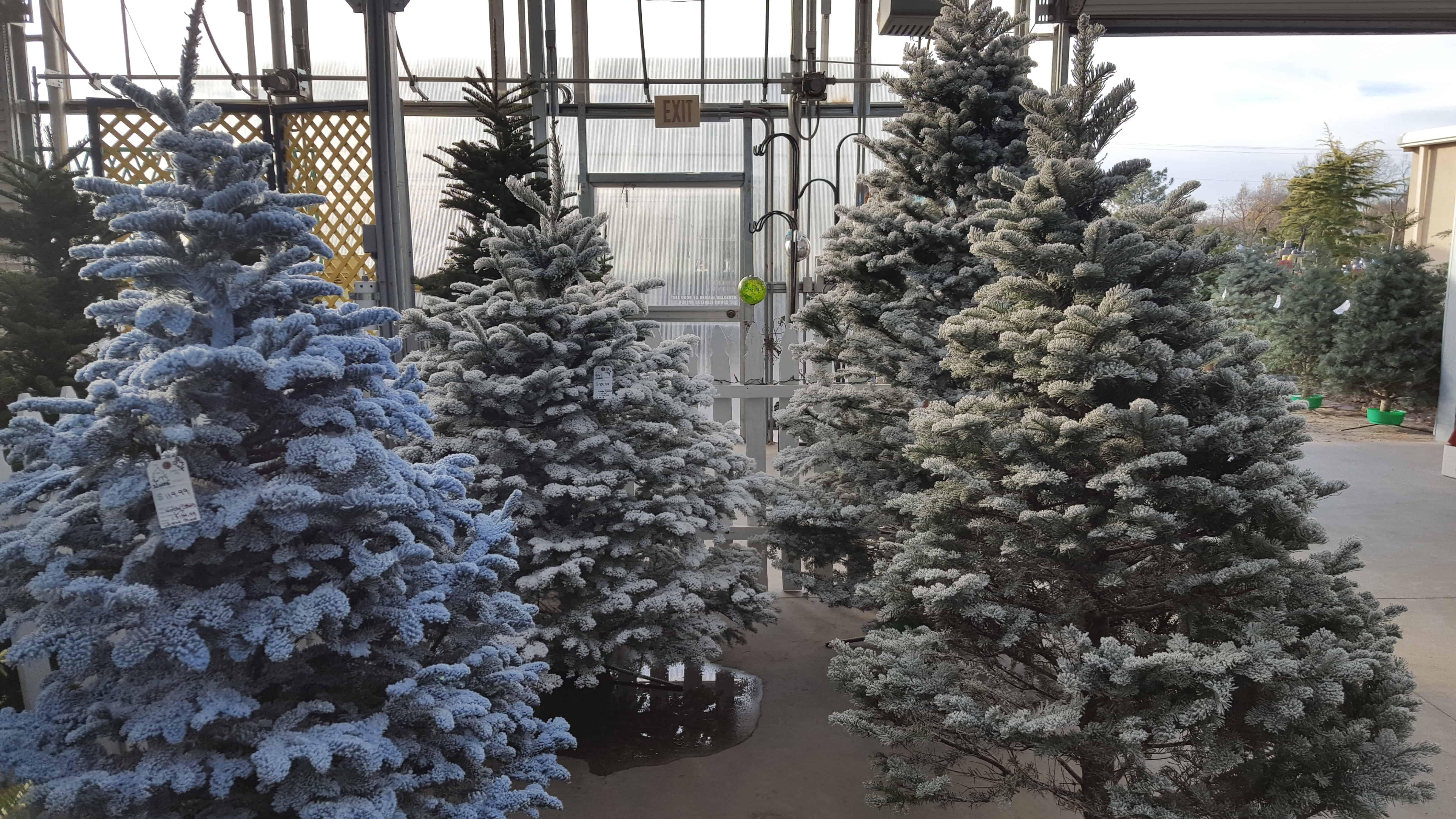 Custom Christmas Tree Flocking   Hong\'s Landscape & Garden Center
